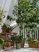 Fruit and vegetable balcony