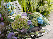 Fresh cut Hydrangea 'Endless Summer' and 'Forever' flowers