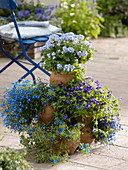 Pot tower planted with Ageratum 'Alto Delft', Lobelia 'Bavaria'