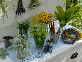 Plants that help against moths