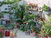 Naschterrasse mit Gemüse, Obst und Kräutern