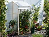 Self-built canopy for Lycopersicon, Capsicum annuum