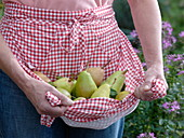 Woman with different pears in the apron