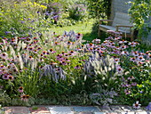 Late summer bed with Echinacea purpurea, Agastache