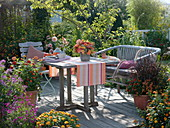 Late summer terrace with Zinnia (Zinnia), Pennisetum 'Rubrum'