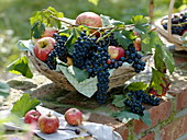 Grapes and apples in basket of clematis tendrils