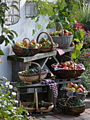 Baskets of apples, pears, grapes, plums and elderberries