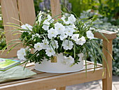 Petunia, carex (sedge) in white metal bowl
