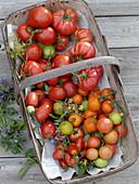 Verschiedene Tomatensorten im Korb