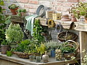 Pot table with freshly harvested herbs and pots