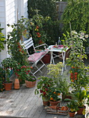 Skiving terrace with tomatoes and peppers