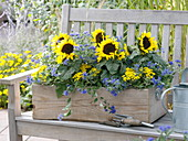 Sunflowers in wooden box on the bench