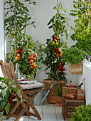 Tomatoes in tubs on the balcony