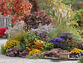 Colorful autumnal bed on the terrace with oak leaf hydrangea
