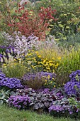 Autumnal bed with asters and grasses