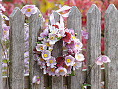 Small hanging wreath from Anemone hupehensis 'Septembercharm'