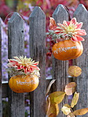 Small pumpkins with message hanging on fence