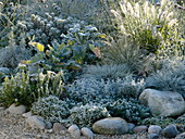 White-silver bed with perennials and grasses in hoarfrost