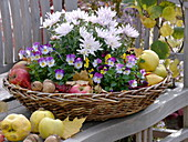 Wicker basket on wooden bench with chrysanthemum, viola