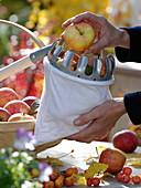 Women at the apple harvest