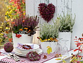 Calluna Garden Girls 'Amethyst' blue red, 'Alicia' white in square planters