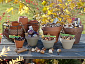 Still life with flower bulbs that have to be planted in autumn
