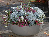 Autumn cup with silver leaf and peat myrtles
