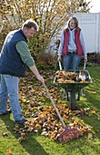 Man gathering foliage together, woman pushing wheelbarrow with cat and autumn leaves