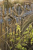 Wreaths winches made from golden barley grass