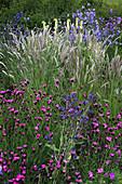 Staudenbeet mit Dianthus carthusianorum (Karthäuser-Nelke), Anchusa azurea (Ochsenzunge), Melica ciliata (Wimper-Perlgras), Digitalis grandiflora (Großblütigem Fingerhut) und Campanula persicifolia (Glockenblume)