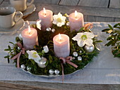 Noble Advent wreath from Pseudotsuga, Viscum albus