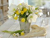 weiße Hippeastrum (Amaryllis) und Tulipa (Tulpen) in grauer Vase