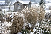 Teahouse in the winter garden, snowy beds with miscanthus
