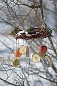 Cornus wreath with fir as bird feeding station