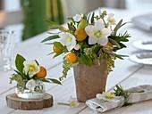 Small bouquets of Helleborus, Citrofortunelle microcarpa