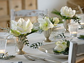 Festive amaryllis table decoration in white and silver