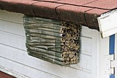 Insect hotel made of caved stems under eaves