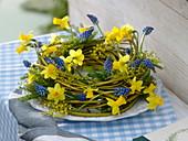 Cornus blue-yellow spring wreath (yellowwood dogwood)