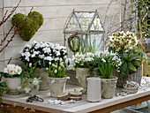 Green-white spring design with rhododendron simsii