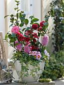 Camellia 'Kirin-No-Homare'rot , 'Il-Tramonto' rosa (Kamelien)