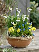 Clay bowl with Leucojum vernum (March Cup), Primula veris