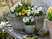 White-yellow spring decoration, flower box with viola cornuta