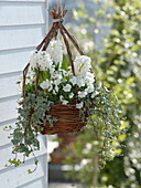Hanging flower basket with white spring bloomers