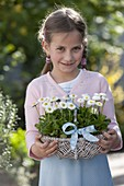 Girl carries basket with Bellis (amarant)