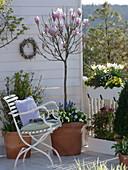Balcony with Magnolia soulangeana, trunk, Primula Belarina