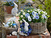 Blue and white Easter basket with Viola wittrockiana 'Marina'