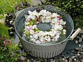 Malus (apple blossoms) wreath in the water