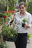 Woman buying tomato plants in the garden center