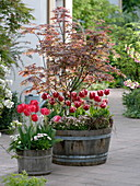 Wooden barrels planted with Acer palmatum