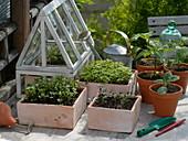 Vegetable cultivation in spring